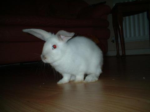 easter-bunnies-010